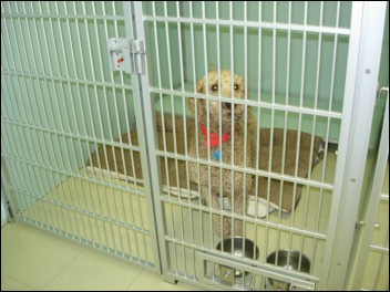dog in kennel at Mystic Pet Resort & Spa
