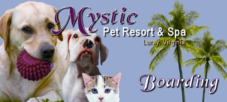 Boarding at Mystic Pet Resort in Luray VA