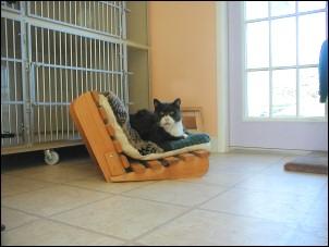 Cat at Mystic Pet Resort & Spa