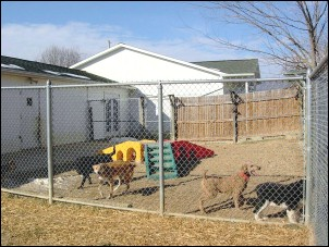 Dogs at play at Mystic Pet Resort