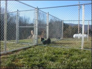 Play yard at Mystic Pet Resort