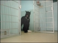 dogfromkennel