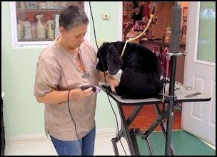 Grooming Dog at Mystic Pet Resort