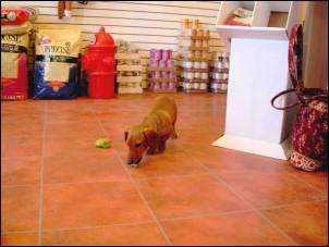 doginshop